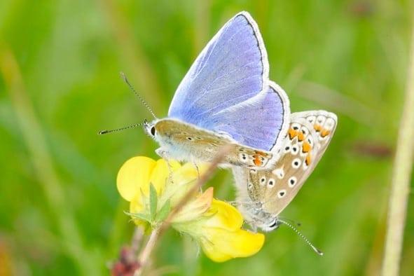 Closeup of butterflies resting on flower